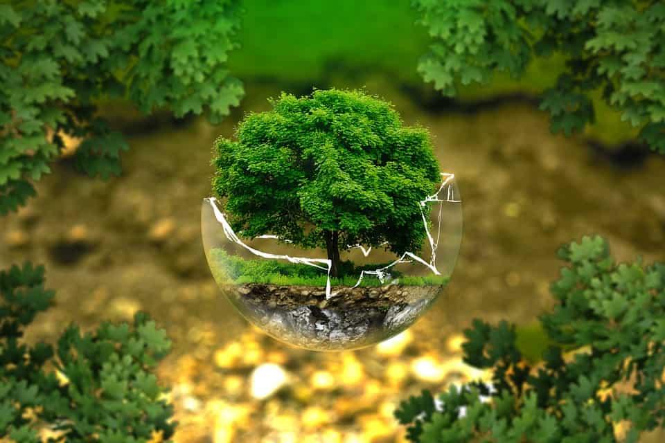 2016 Environmental Review
